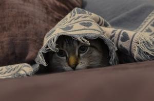 cat-393294_1280