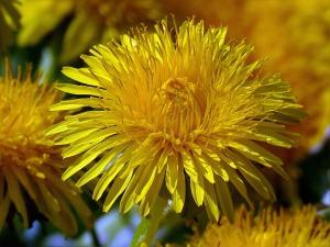flower-946502_1280
