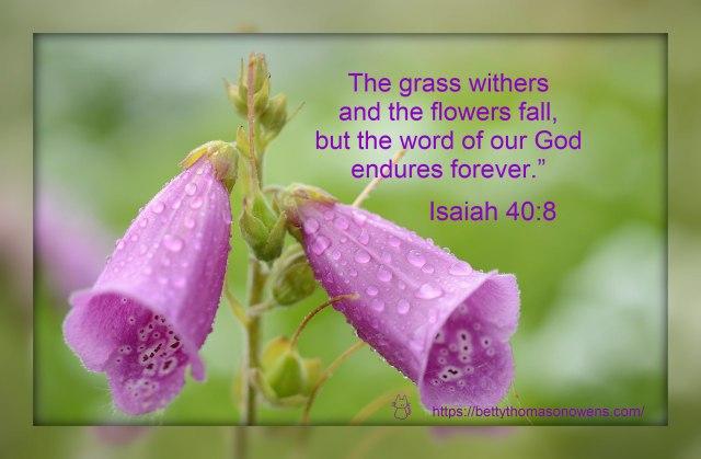 Isaiah 40 Flowers