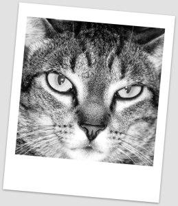 cat-1208511_1280