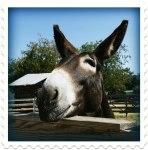 mule-893336_1280