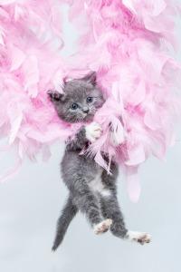 kitten-1040950_1280