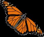 butterfly-312295_1280
