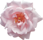 pink-1431073_1280