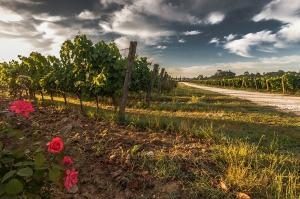 tuscany-428037_1280
