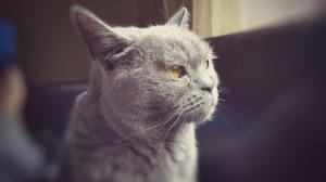 cat-787733_1280