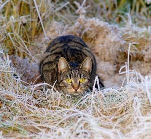 cat-1940489_1280