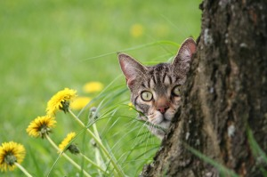 domestic-cat-1774535_1280