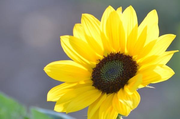 flower-2989995_1280