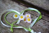 daisy-3392654_1280