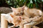 kittens-1916542_1280