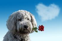 valentines-day-3135789_1280