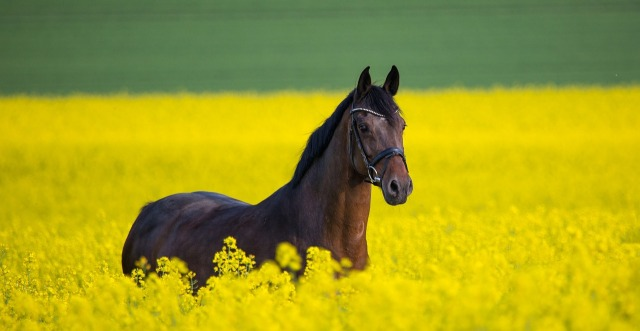 horse-3888661_1280